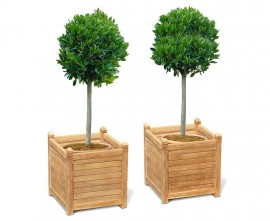 Zen Teak Garden Planters - Set of 2, Extra-Large